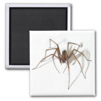 Happy Halloween spider Square Magnet