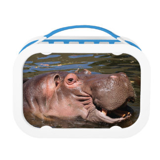 Happy hippo lunch box