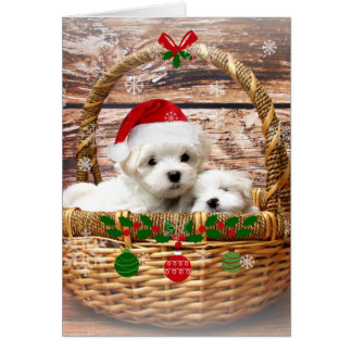 Happy Holidays: Maltese Puppies Card