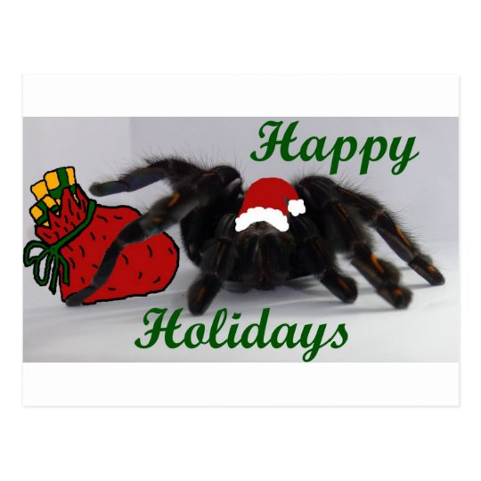 Happy Holidays!  with a Tarantula? Postcard