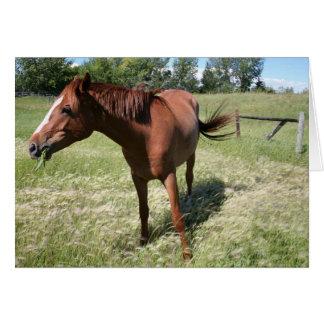 Happy Horse Card