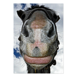 Happy Horse! Funny Nosey Horse Smiles Business Card Templates