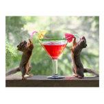 Happy Hour Squirrels