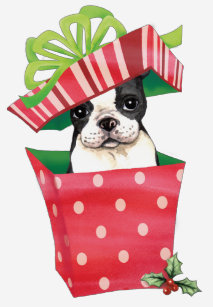 Image result for boston terriers with presents