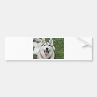 Happy Husky Bumper Sticker