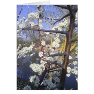 Happy Imbolc (blackthorn blossom) Card