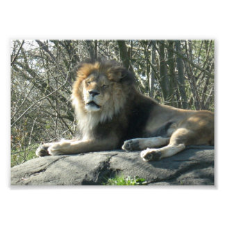 Happy Lion Photo Print