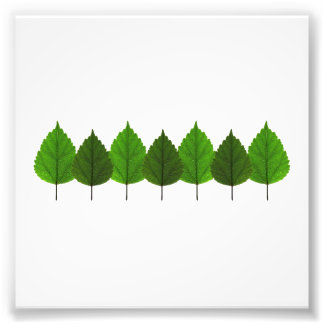 Happy Little Green Tree Leaf Forest Photo