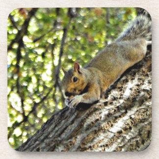 Happy Little Squirrel Drink Coaster