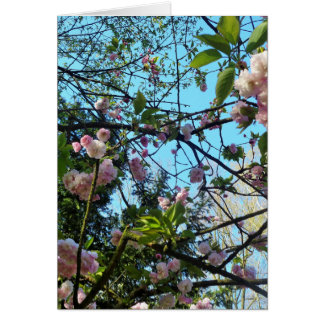 Happy Mother´s Day, Pink Cherry Blossom, Photo Greeting Card