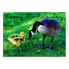 Happy Mother's Day: Canada Goose and Chicks Card