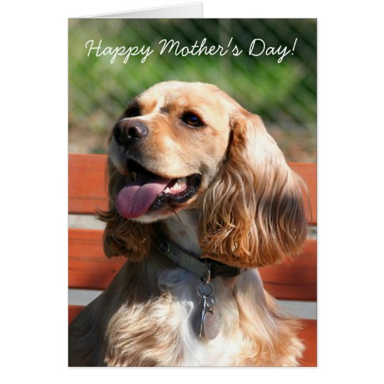 Happy Mother's Day Cocker spaniel greeting card