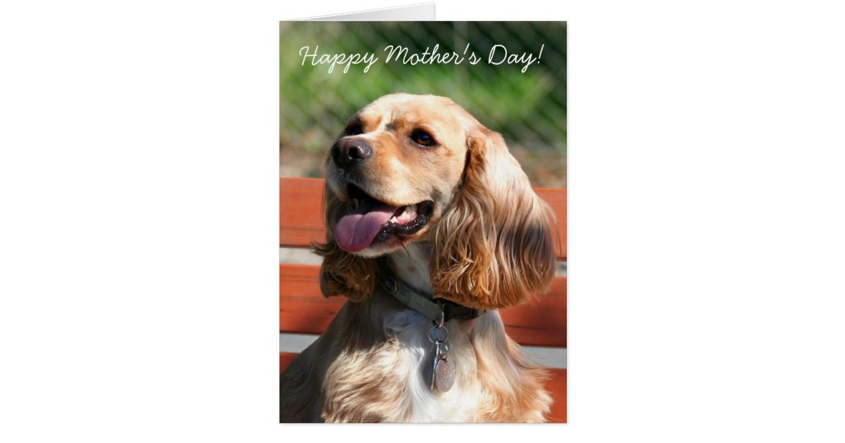 Happy Mother S Day Cocker Spaniel Greeting Card Zazzle Co Uk