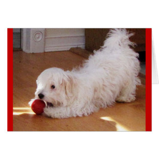Happy Mother's Day - Havanese puppy Card