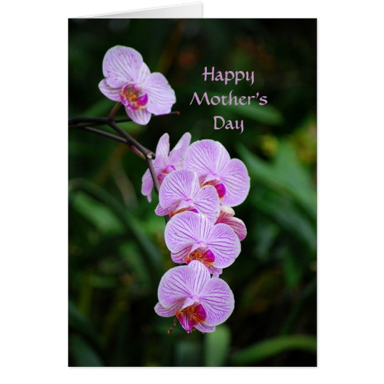 Happy Mother's Day Purple Phalaenopsis Orchid Card
