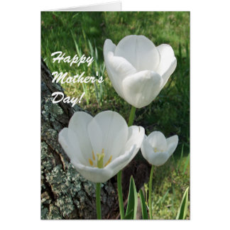 Happy Mother's Day, White Tulips Greeting Card