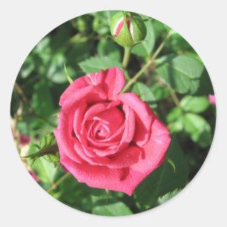 Happy Old Rose Classic Round Sticker