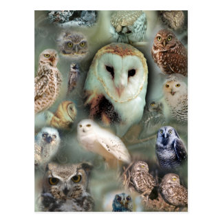 Happy Owls Postcard