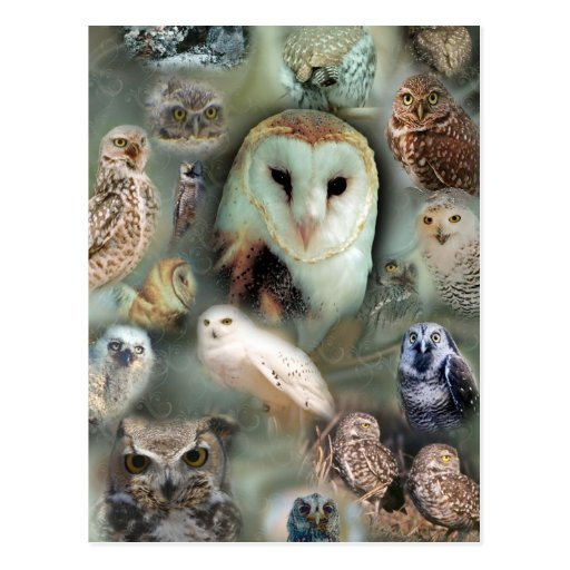 Happy Owls Post Card