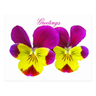 Happy Pansy Greetings Postcard