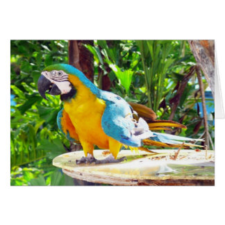 Happy Parrot Greeting Card
