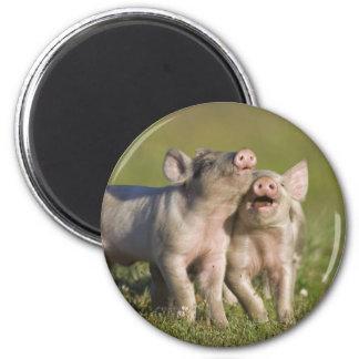 Happy Piglets 6 Cm Round Magnet