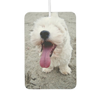 Happy Puppy white dog, malteese, maltipoo. Car Air Freshener