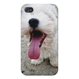 Happy Puppy white dog, malteese, maltipoo. iPhone 4/4S Covers