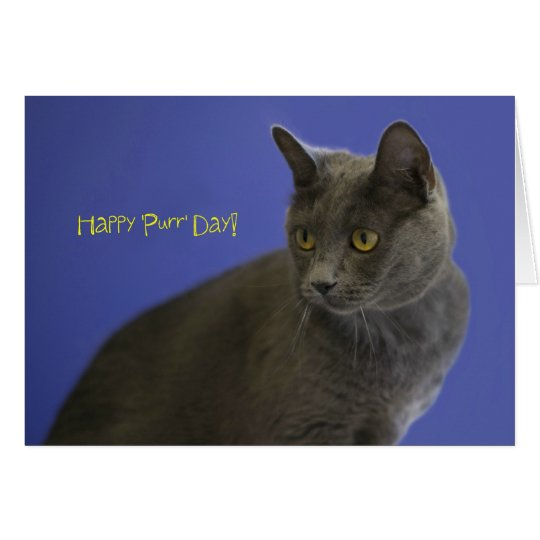 Happy Purr Day Russian Blue by Focus for