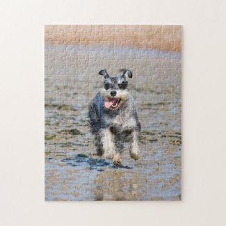 Happy Schnauzer Running On Beach Jigsaw Puzzle