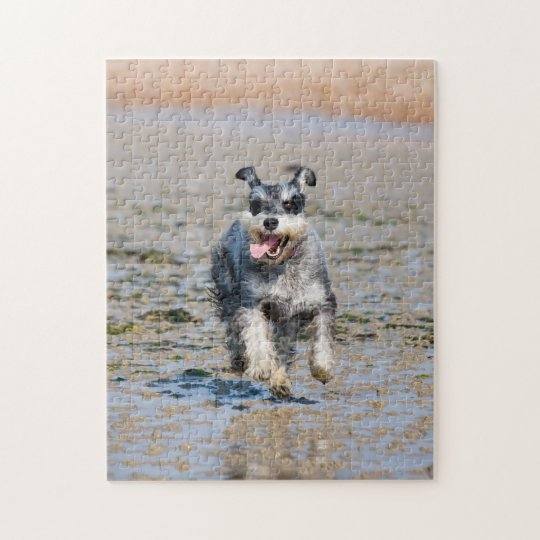 Happy Schnauzer Running On Beach Jigsaw Puzzle