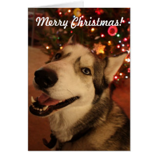 Happy Siberian Husky Christmas Card