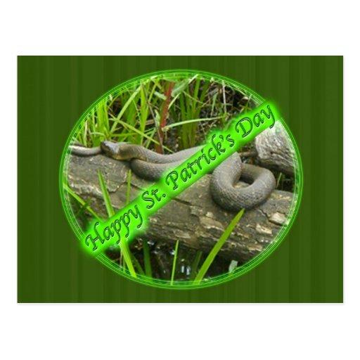 Happy St. Patty's Day No Snakes Postcards