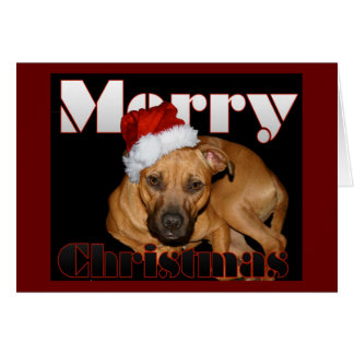 Happy Staffy Christmas Card