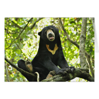 Happy Sun Bear Greeting Card