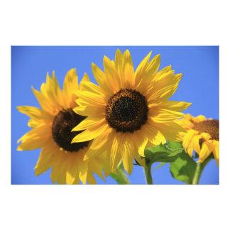 Happy Sunflower Photo