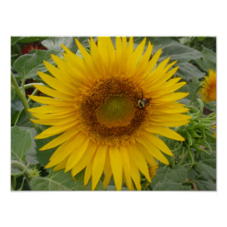Happy Sunflower Poster