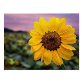 Happy Sunflower Print