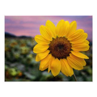 Happy Sunflower Print Photograph