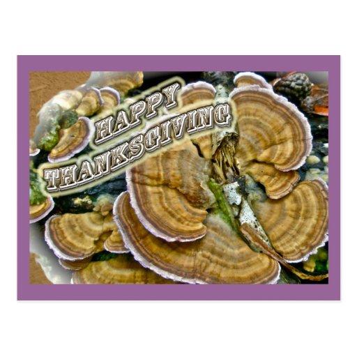 Happy Thanksgiving Shelf Fungus Series Postcards