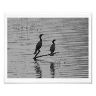 Happy Together Photo Print