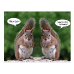 Happy Twins Day, Red Squirrel Humour, Cute and Per Postcard