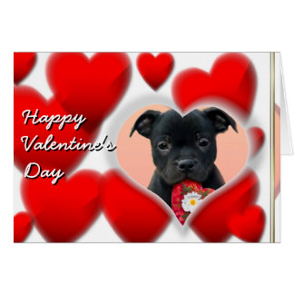 Happy Valentine s Staffordshire Bull Terrier Card