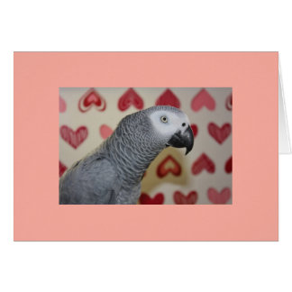 Happy Valentine's Day African Grey Greeting Card