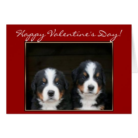 Happy Valentine's Day Bernese Mountain Dog card