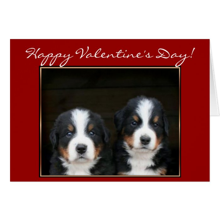 Happy Valentine's Day Bernese Mountain Dog card