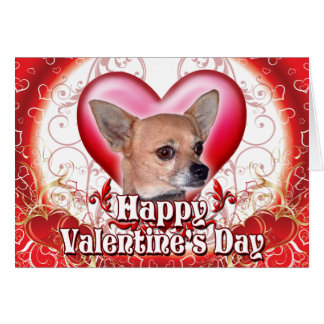 Happy Valentines Day Chihuahua Card