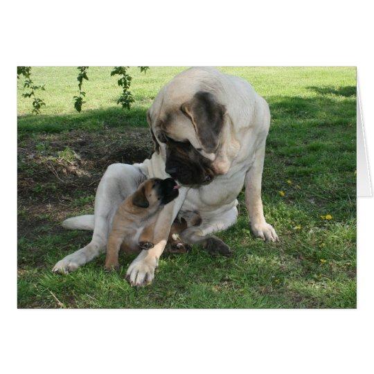 Happy Valentines Day Dad Mastiff card