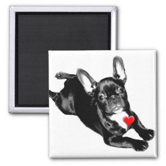 Happy Valentine's Day French Bulldog magnet