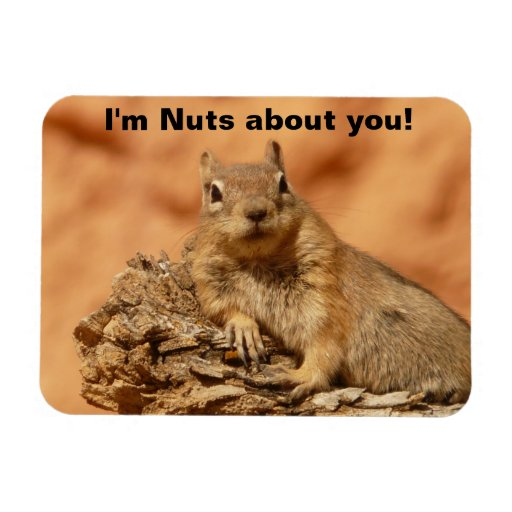 Happy Valentines Day Funny Squirrel Flexible Magnets